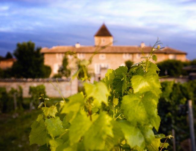 Vineyard stroll