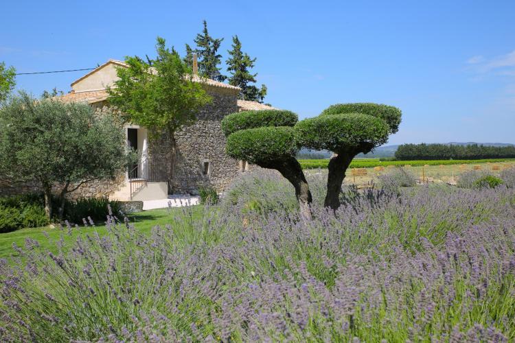 Entre Vigne et Garrigue-14