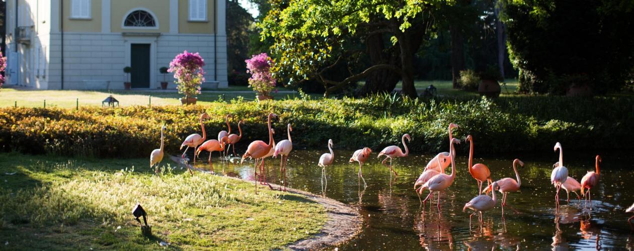 Villa Abbondanzi Resort-1