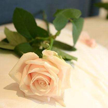 Rose sur un oreiller évoquant la Saint Valentin