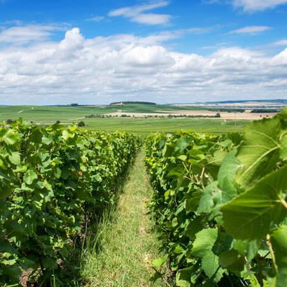 Faites une halte en Champagne-Ardenne