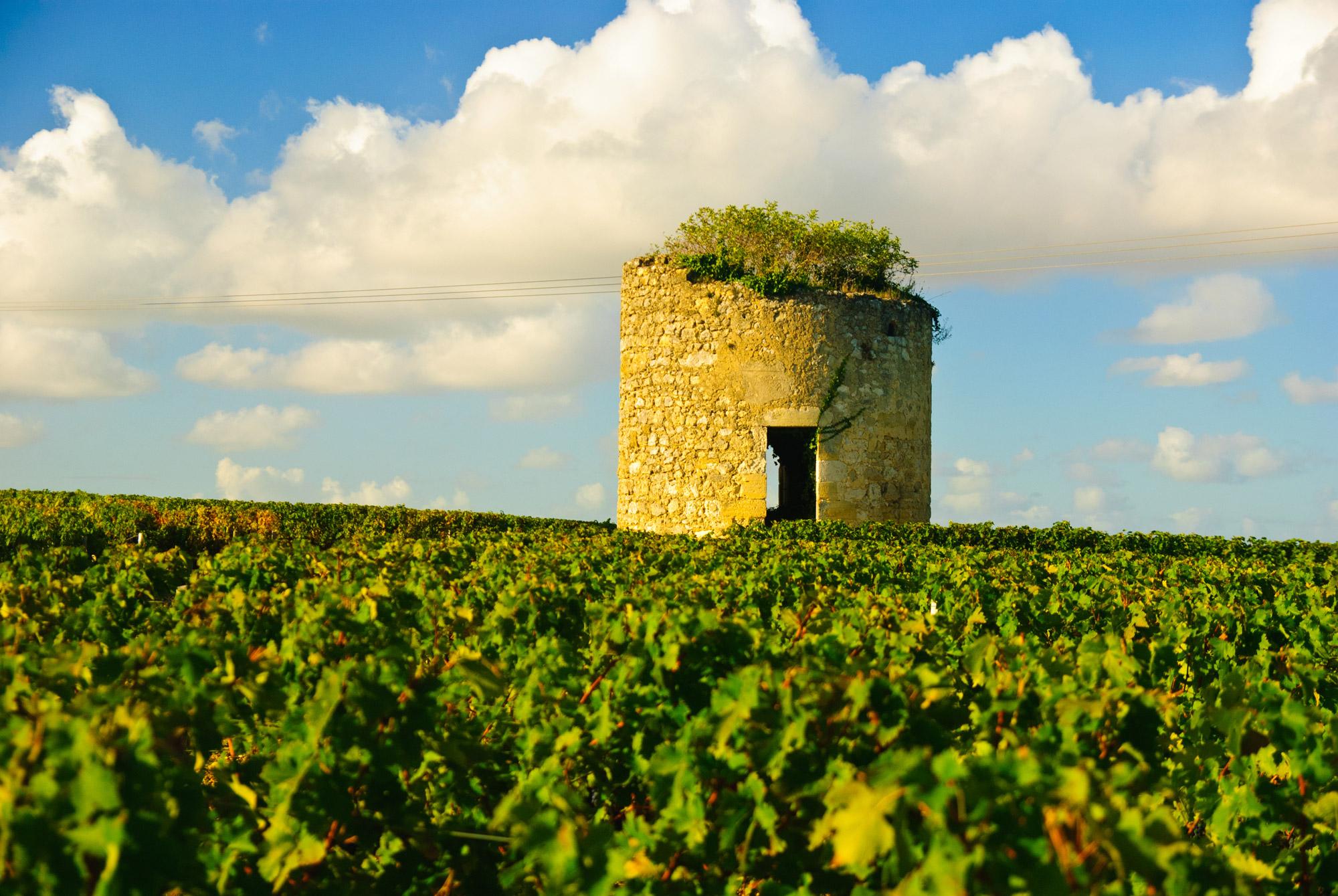 Tour médiévale en ruine sur la route des vins dans les vignobles du Medoc à Bordeaux
