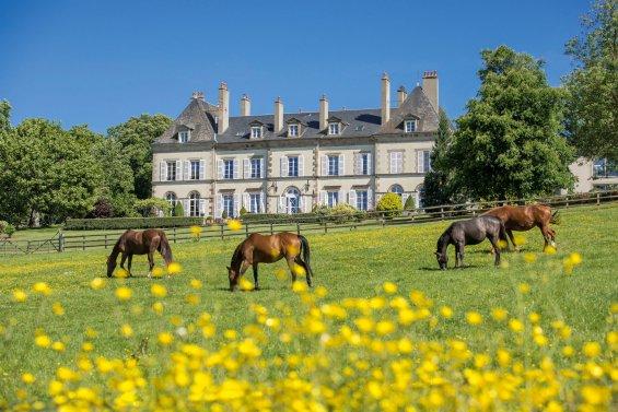 Paturage avec chevaux et château en arrière-plan