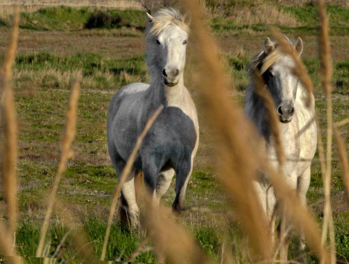 2 chevaux en train de gambader en pleine nature