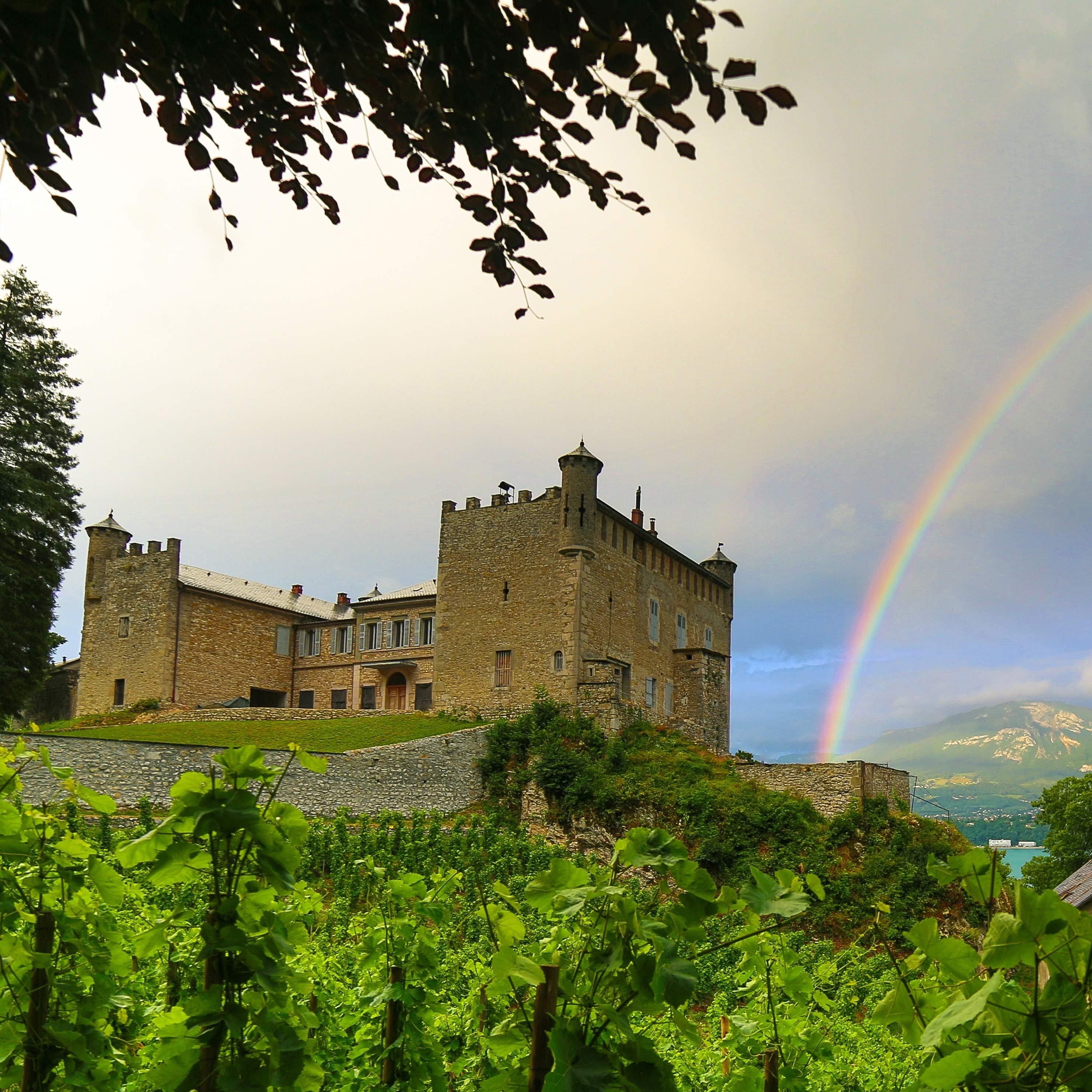 vue d'un château depuis des vignes avec un arc en ciel