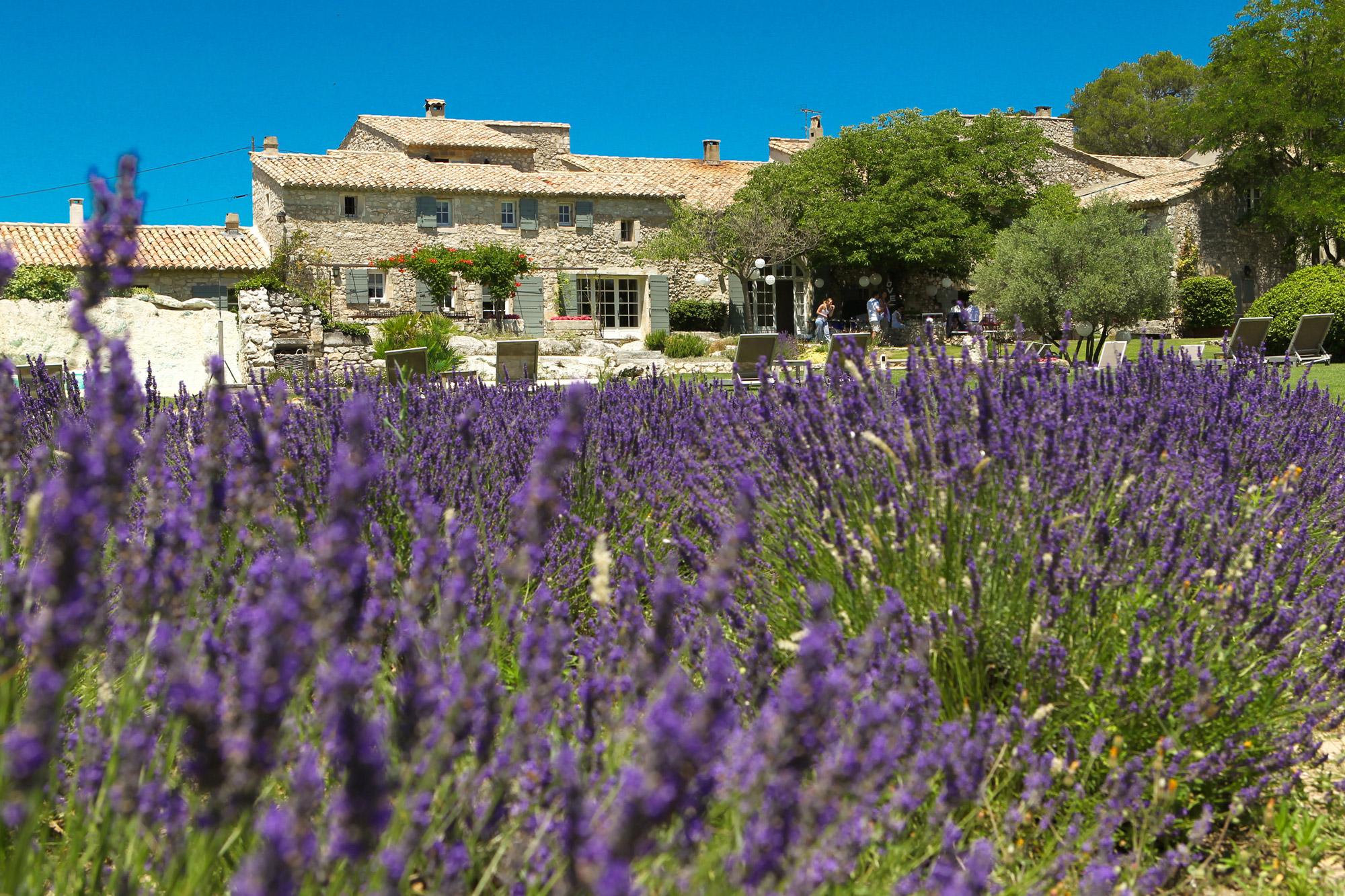 Piscine extérieure dissimulée dans un jardin d'inspiration provençale.