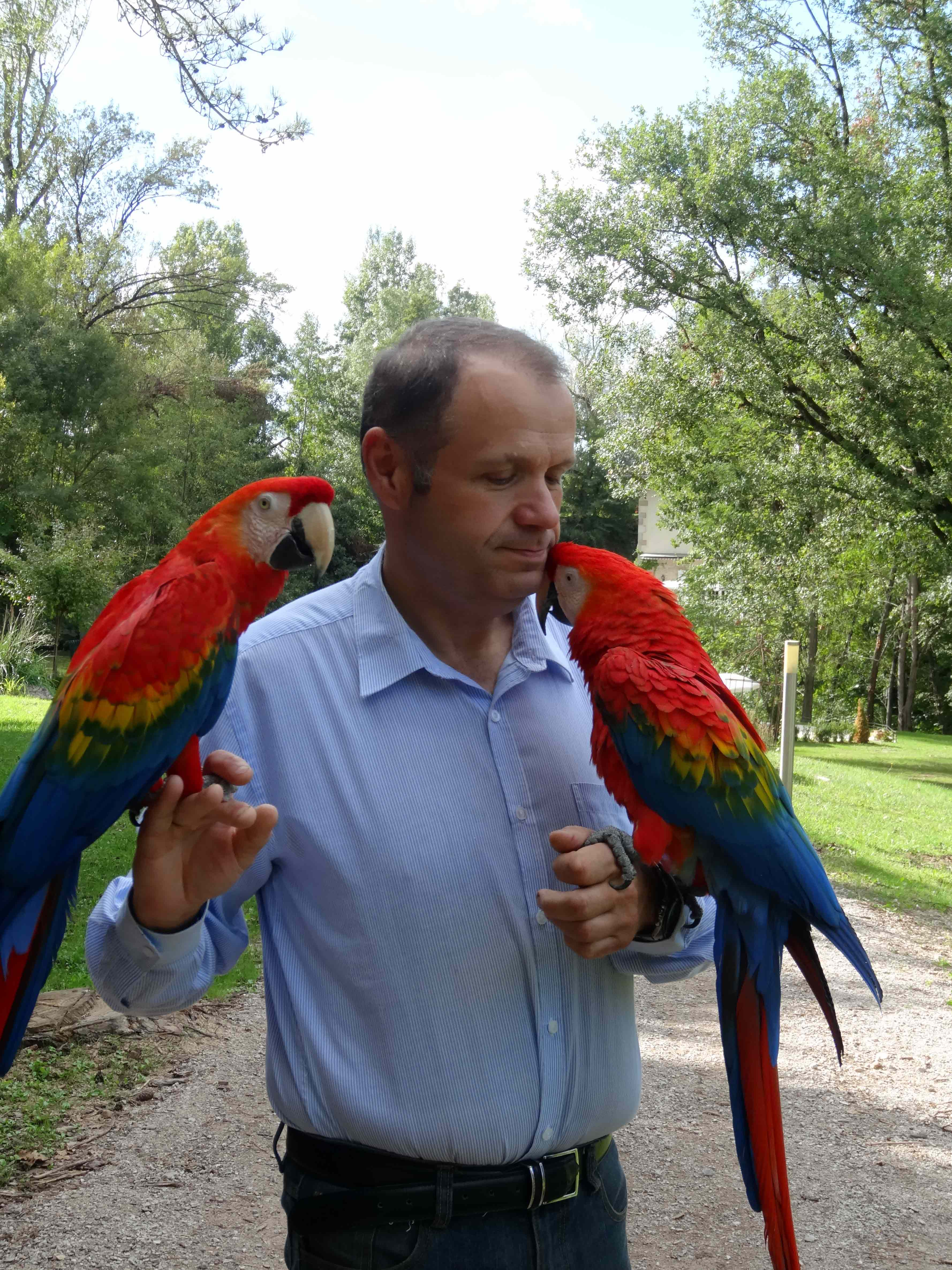 un homme avec deux perroquets