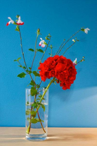 Photo détail fleur rouge fond mur bleu