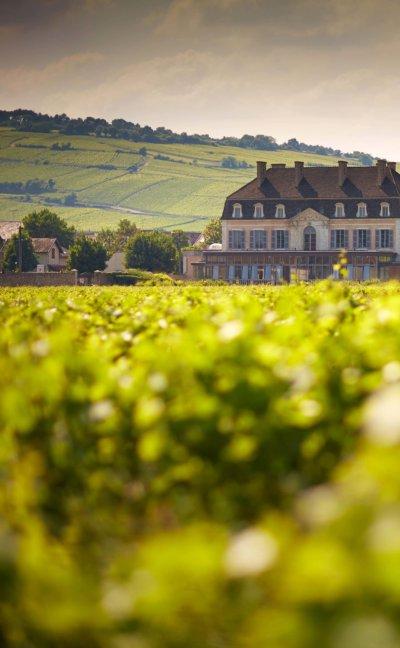 Château avec vue sur des plans de vignes
