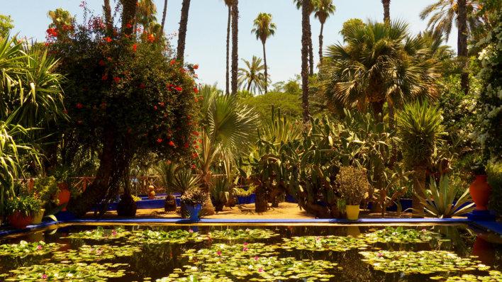 Jardin oasis palmier, arbres fruitiers, bassin avec nénuphars