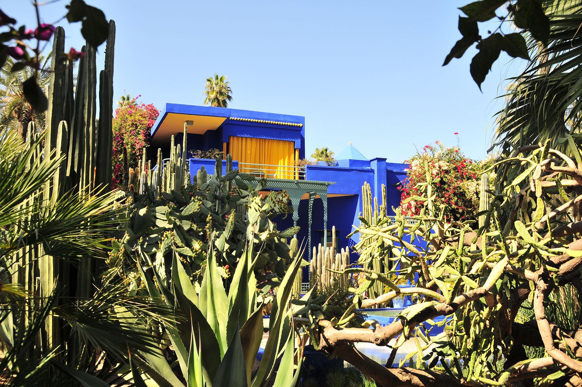 Jardin oasis palmier, arbres fruitiers, bassin avec nénuphars et batîment bleu et jaune en fond