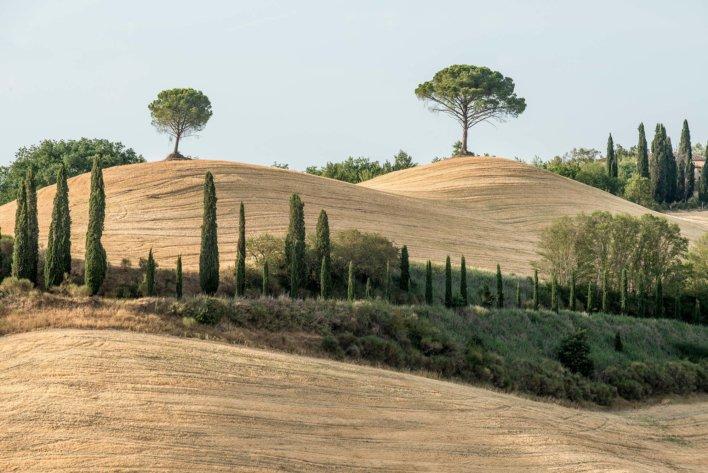 Paysage vallonnée typique de toscane, champs de blé et quelques arbres et arbustes