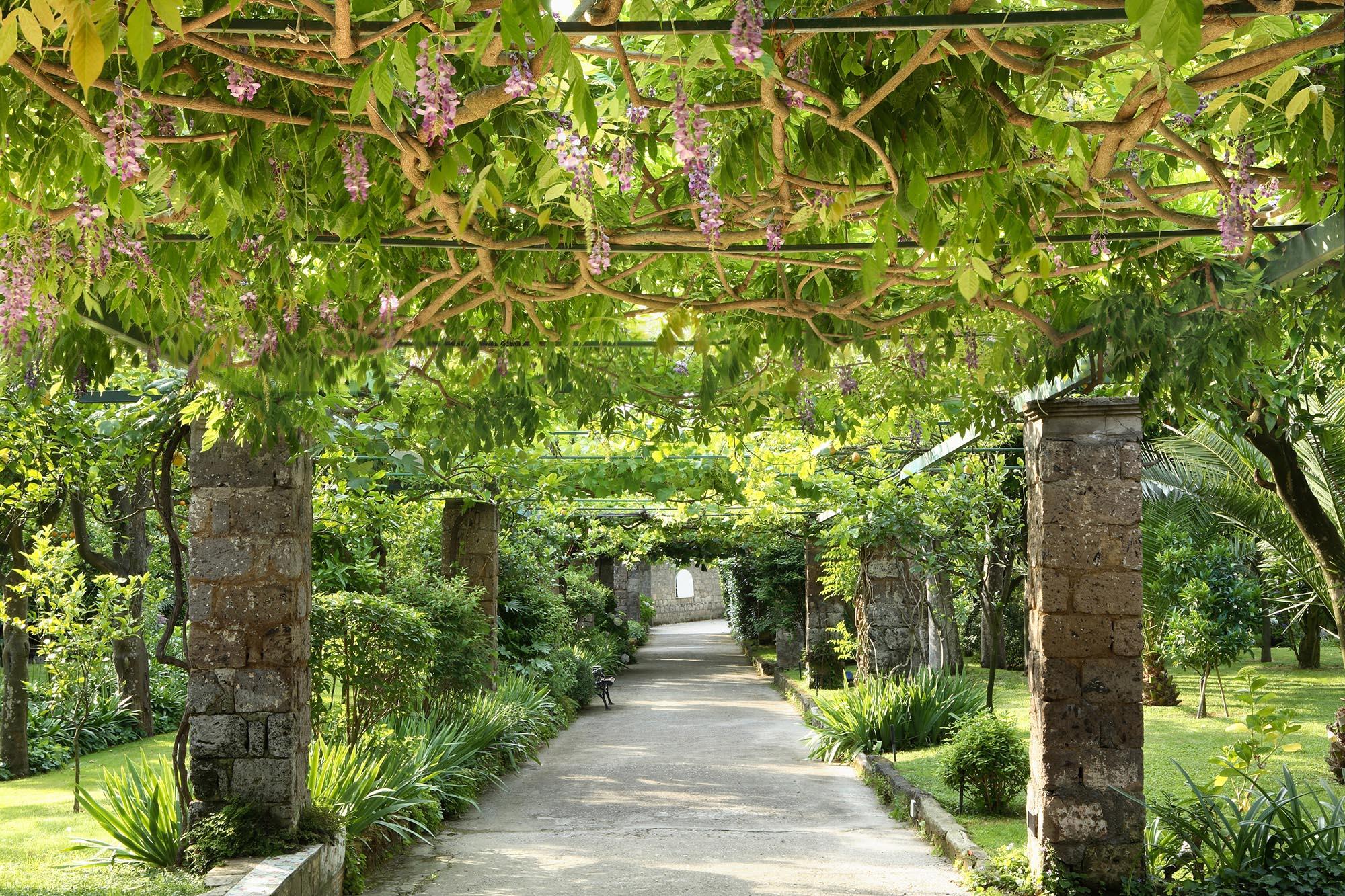 Grande allée avec des colonnes de chaque coté et des fleur de couleurs violette au-dessus.