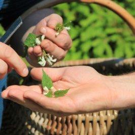 Deux mains s'éahngeant des feuilles verte avec panier en osier en arrière plan