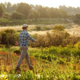 Homme marchand dans un potager avec un panier en osier