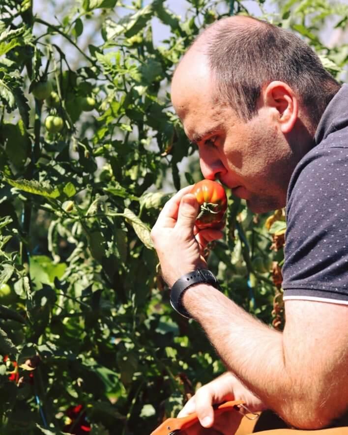 Un homme sent une tomate bio dans une serre