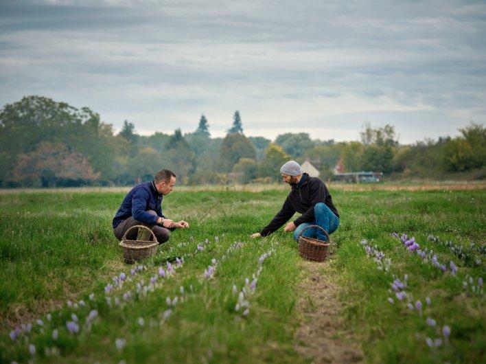 Cueillette de la fleur avec le chef Christophe Hay © Julie Limont