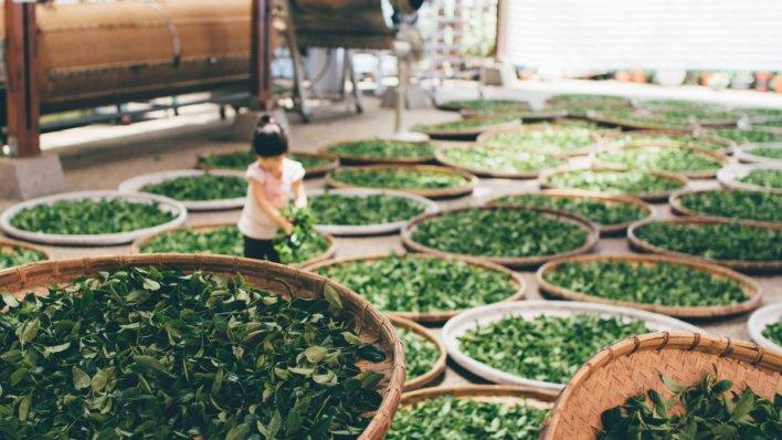 Usinage du thé © Free-Photos Pixabay