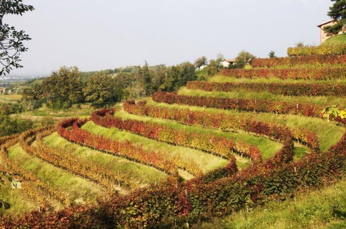 Vignoble planté en terrasse Italie du Nord