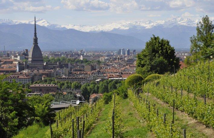 Vignoble à Turin