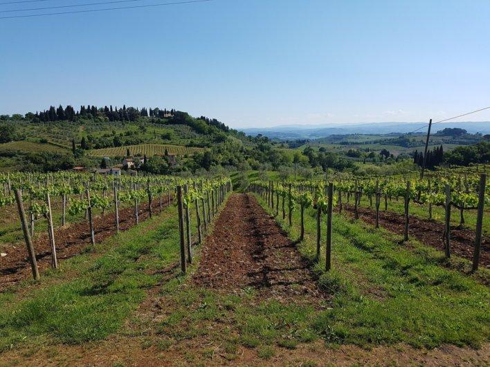 Vignoble à Chianti
